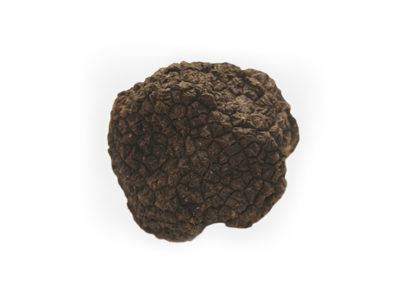 Black-Fall-Truffle