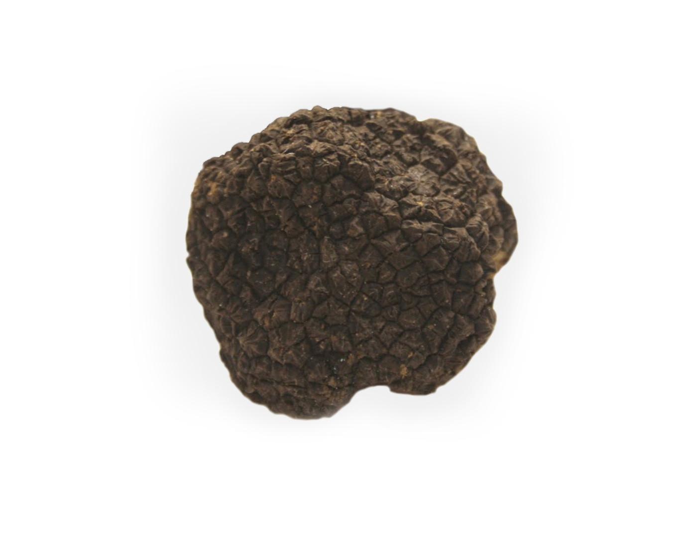 Black-Fall-Truffle