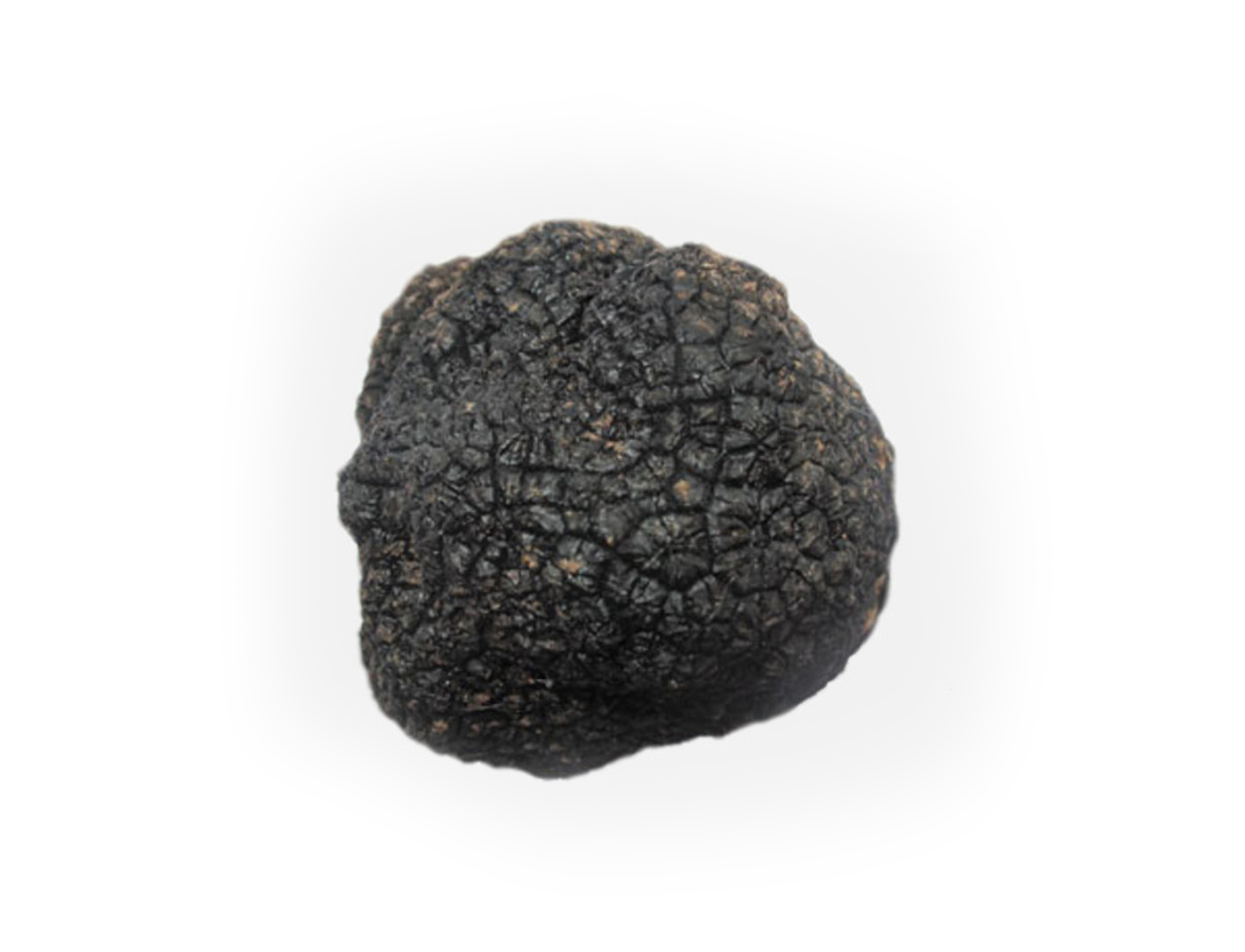 Black-Summer-Truffle