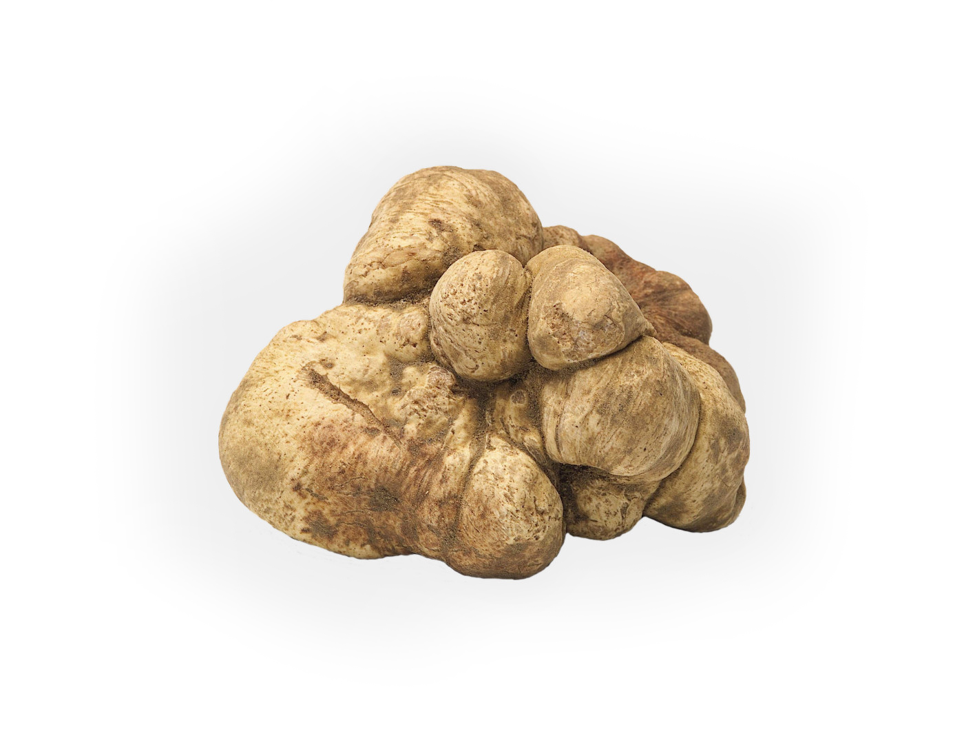 white-truffle_edit